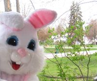 OMB_bunny