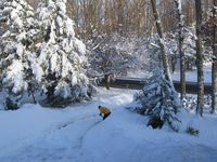 Snow09 015