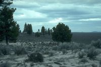 Lost_Forest_Outskirts,_Lakeview_BLM,_Oregon