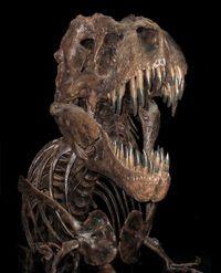 T-rex-769800