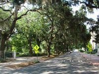 Savanahh Georgia Live  Oaks Quiet Street